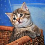 Little furry ball by ZoranPhoto