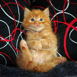 Little orange furry ball