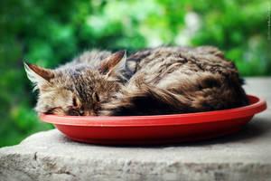 I sleep where I eat