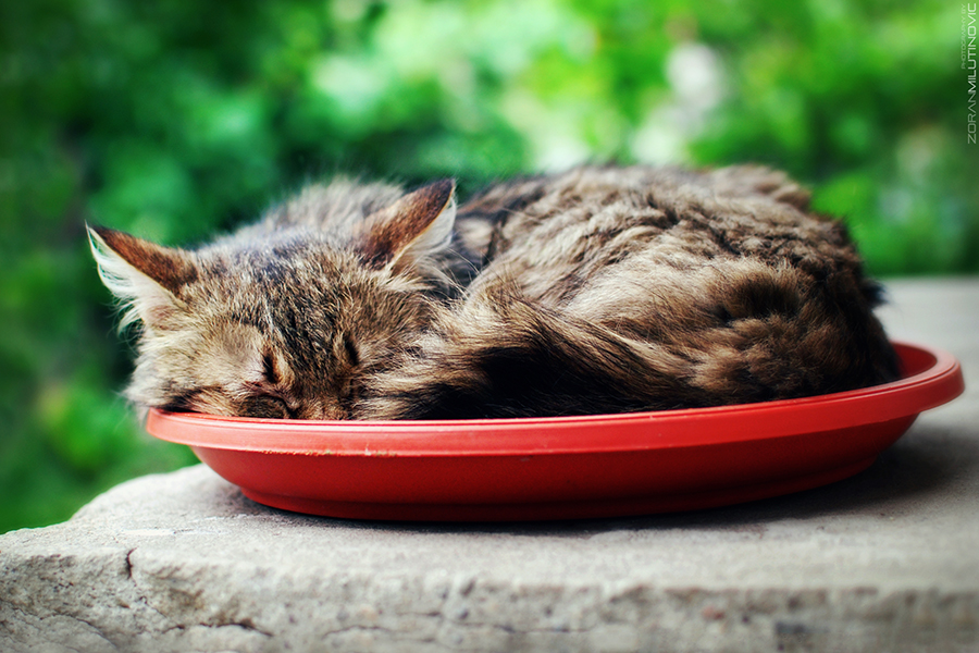 I sleep where I eat by ZoranPhoto