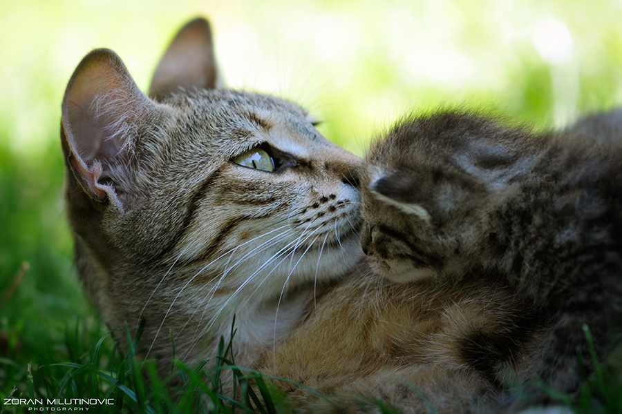 Hold Me, Mommy!