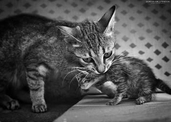 No more photo session by ZoranPhoto