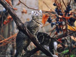 Little Hunters by ZoranPhoto