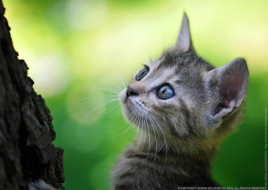 Little Climber by ZoranPhoto