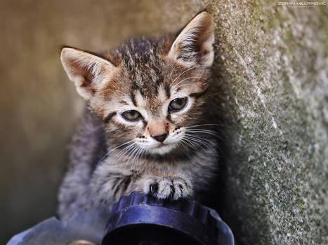 Driving kitten