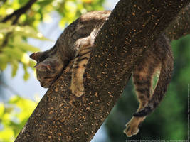 Funny sleeping mode by ZoranPhoto