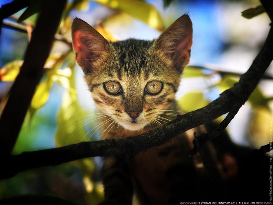 Like a wildcat