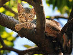 Up in the tree - best place to be