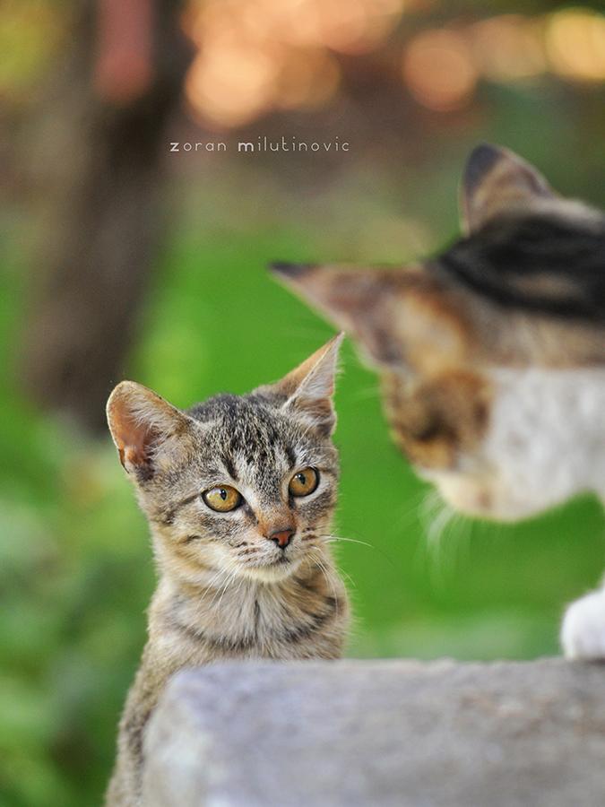 You Talkin' to Me? by ZoranPhoto