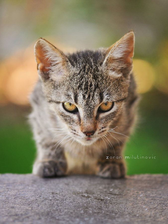 What?! by ZoranPhoto