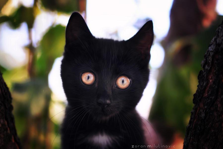 Glowing eyes by ZoranPhoto