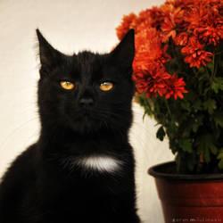 Kitten who loves flowers by ZoranPhoto