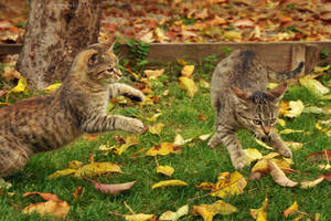 Jumping cats by ZoranPhoto