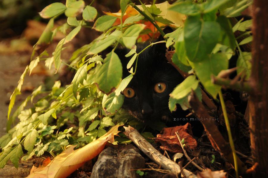 Hiding by ZoranPhoto