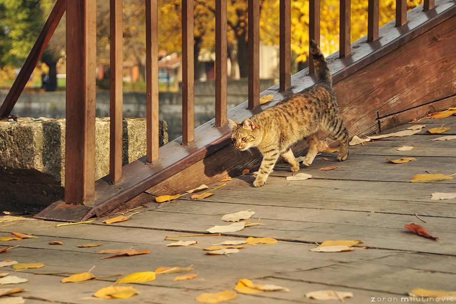 Walking my way by ZoranPhoto