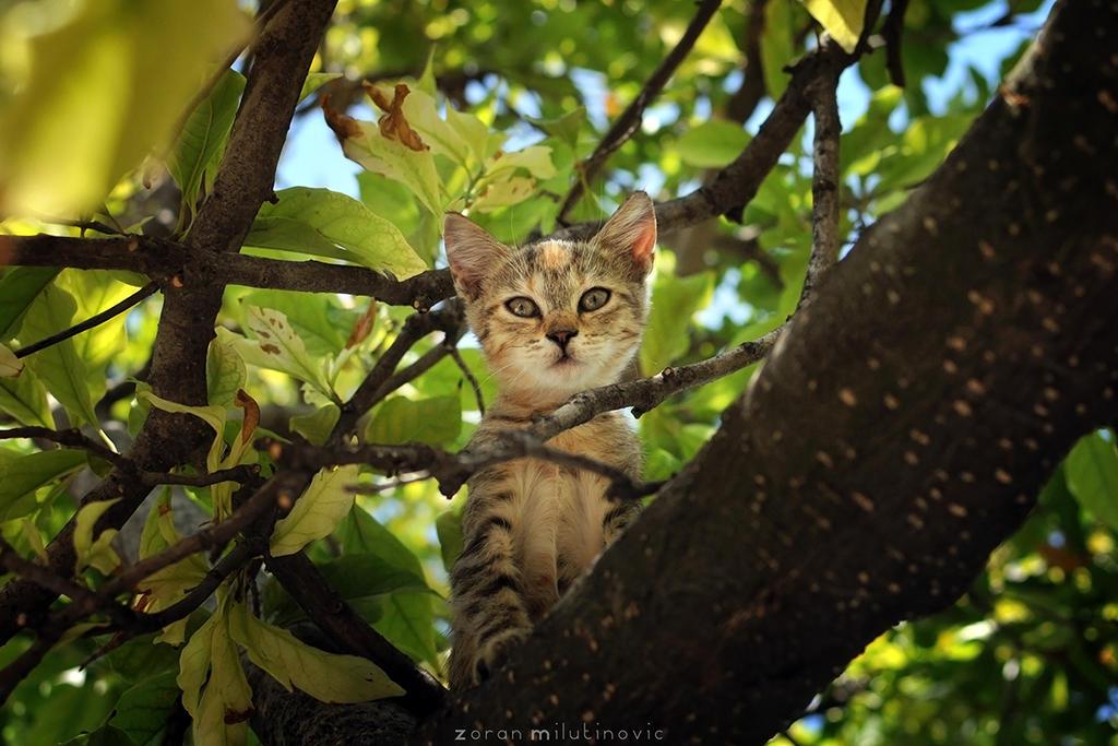 Little Hunter by ZoranPhoto
