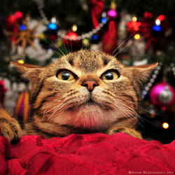 Scared of Christmas tree!