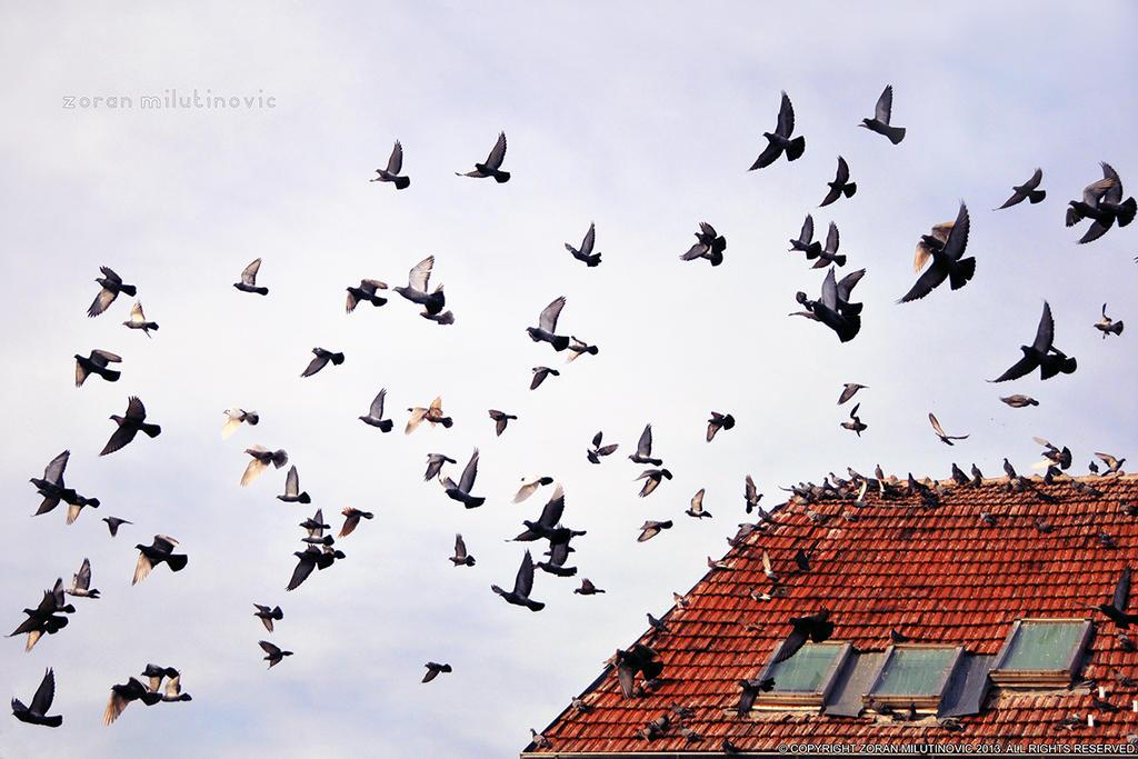 Fly away by ZoranPhoto