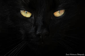 The Eyes Of A Hunter by ZoranPhoto