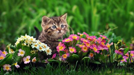 Little florist by ZoranPhoto