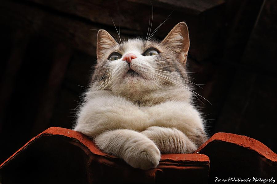 Sexy fur by ZoranPhoto
