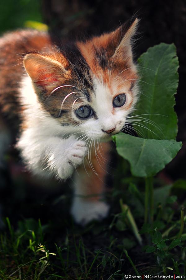 Sweet Gardener by ZoranPhoto