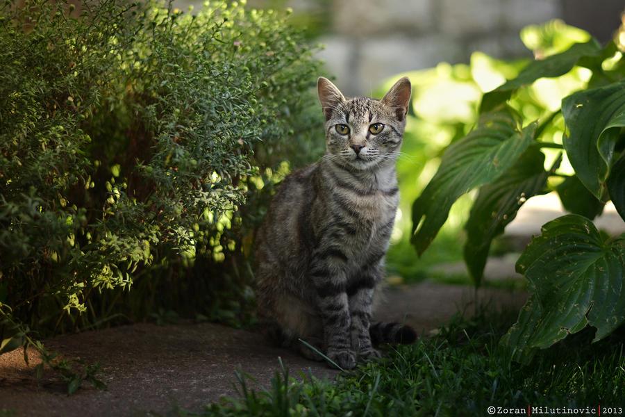 Green Guardian by ZoranPhoto