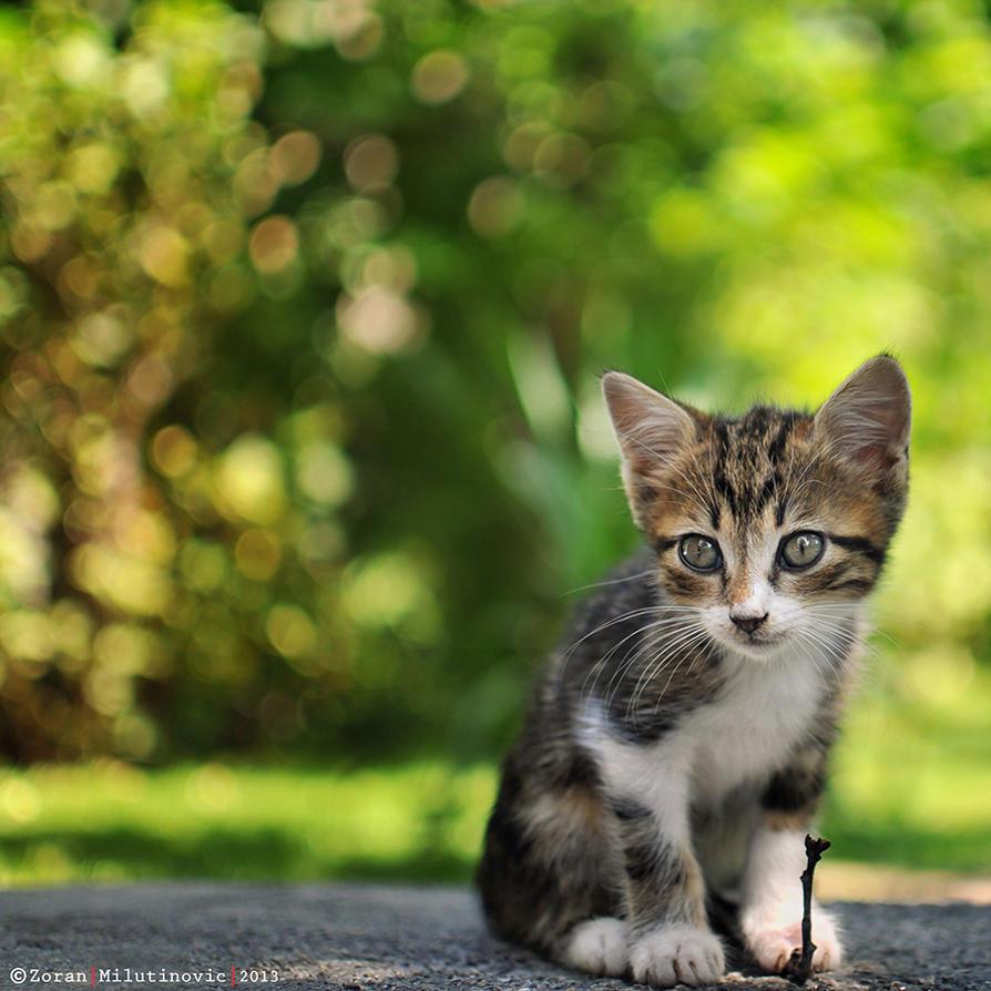 Kitty of the Shiny Bokeh by ZoranPhoto