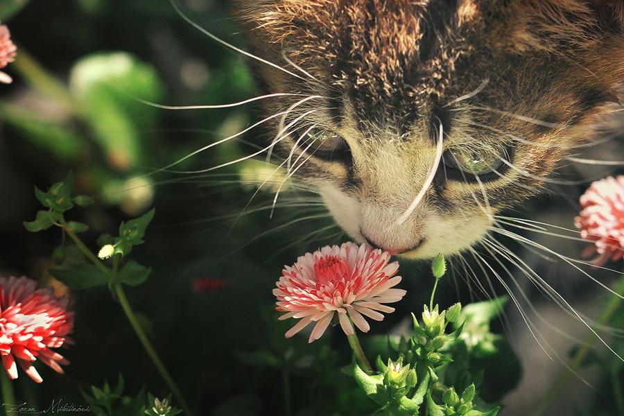 Smells good? by ZoranPhoto
