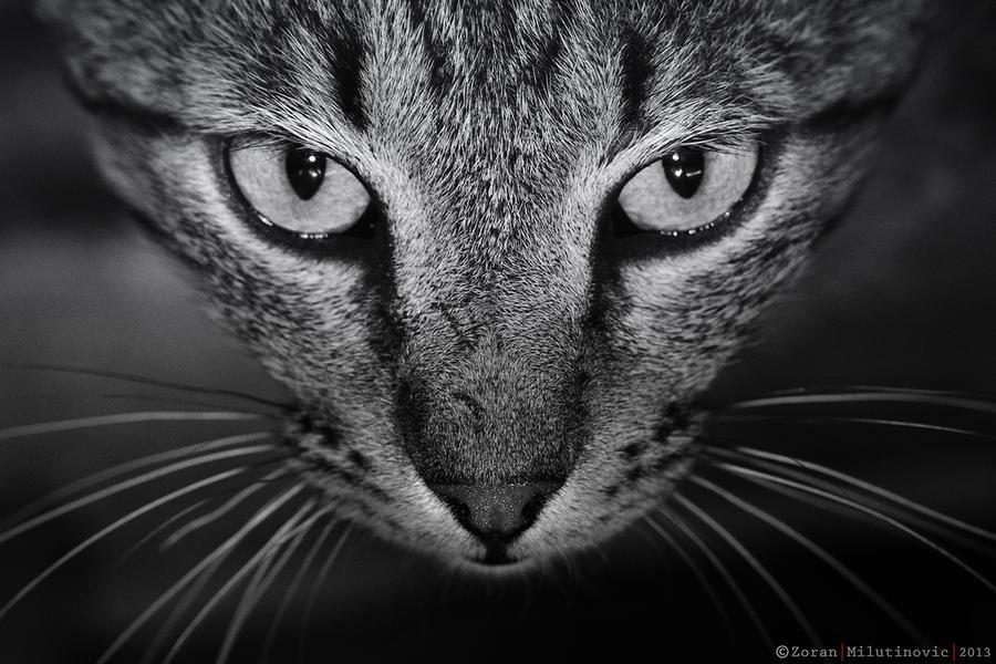 Fearless! by ZoranPhoto