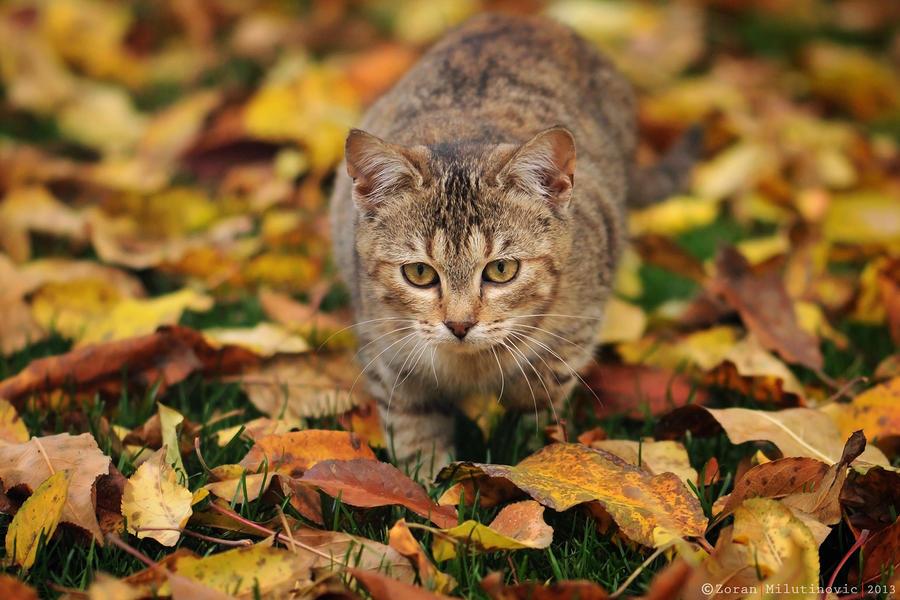 Sneaky cat by ZoranPhoto