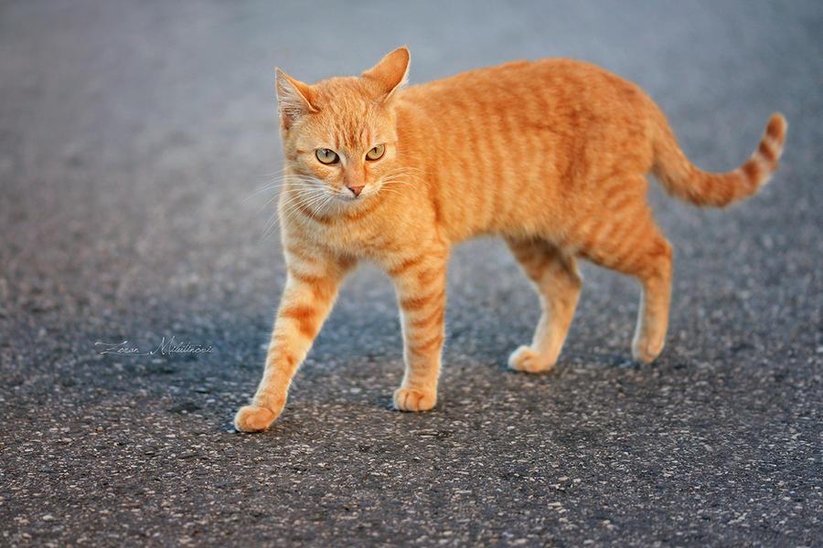 Tiny Garfield by ZoranPhoto