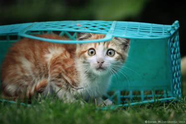 Surprised basket kitty