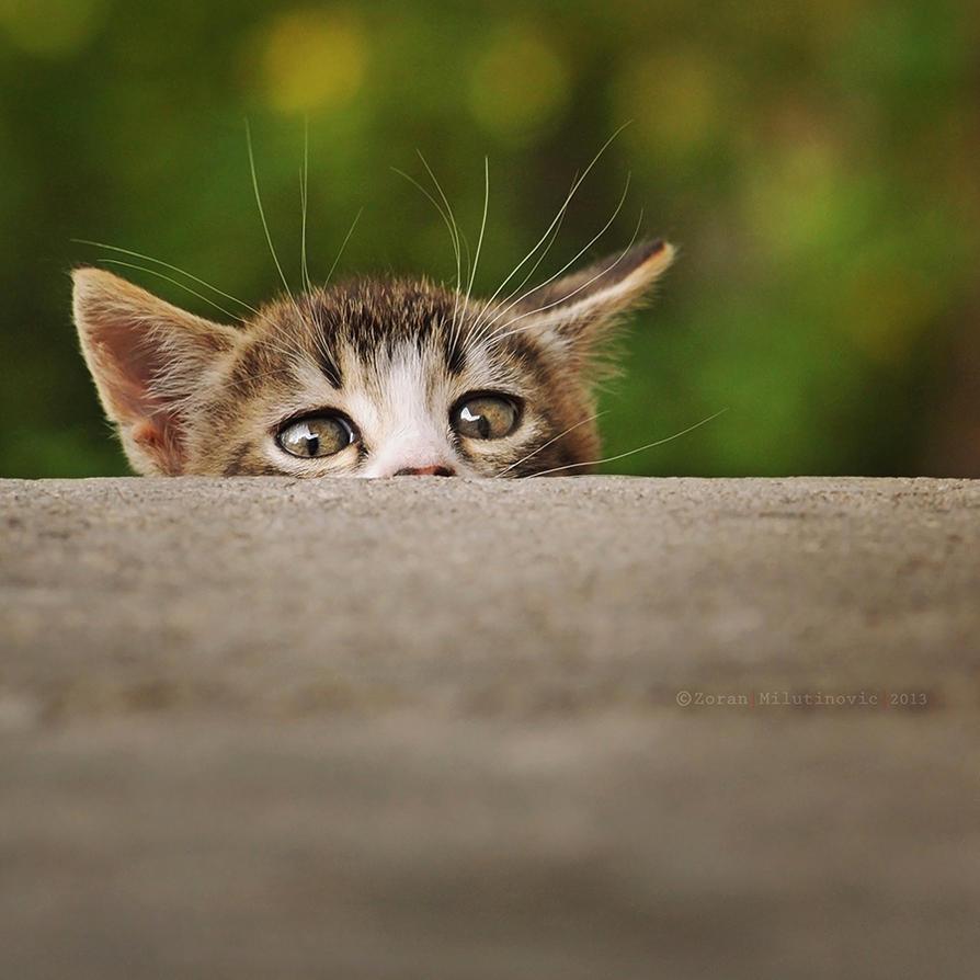 Where's my cookie? by ZoranPhoto