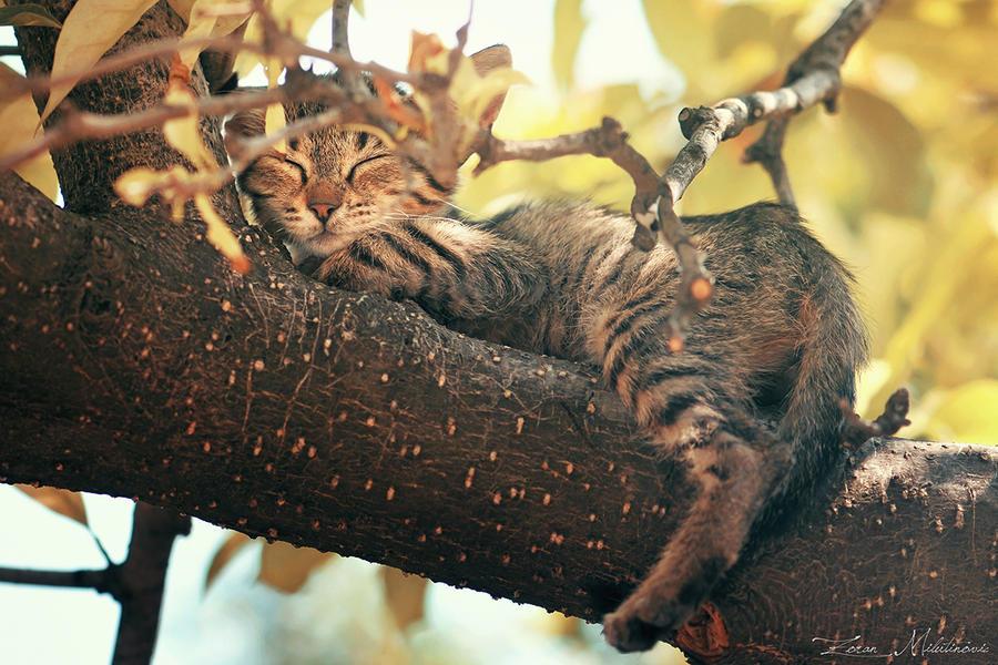 Lazy Sunday by ZoranPhoto