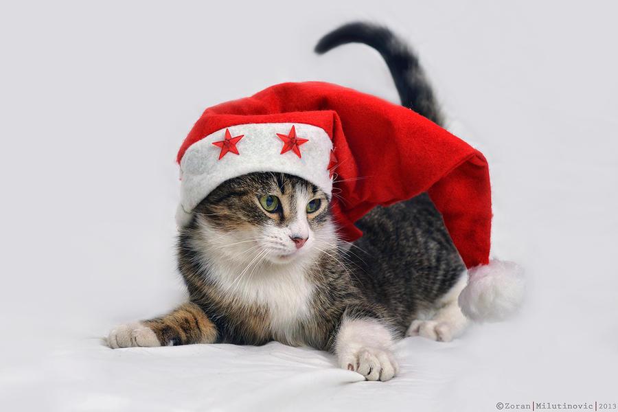 Santa's little helper by ZoranPhoto
