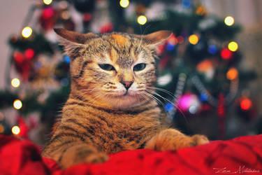 Merry Christmas by ZoranPhoto