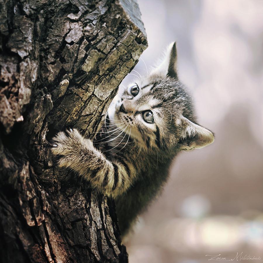 Furry Alpinist by ZoranPhoto