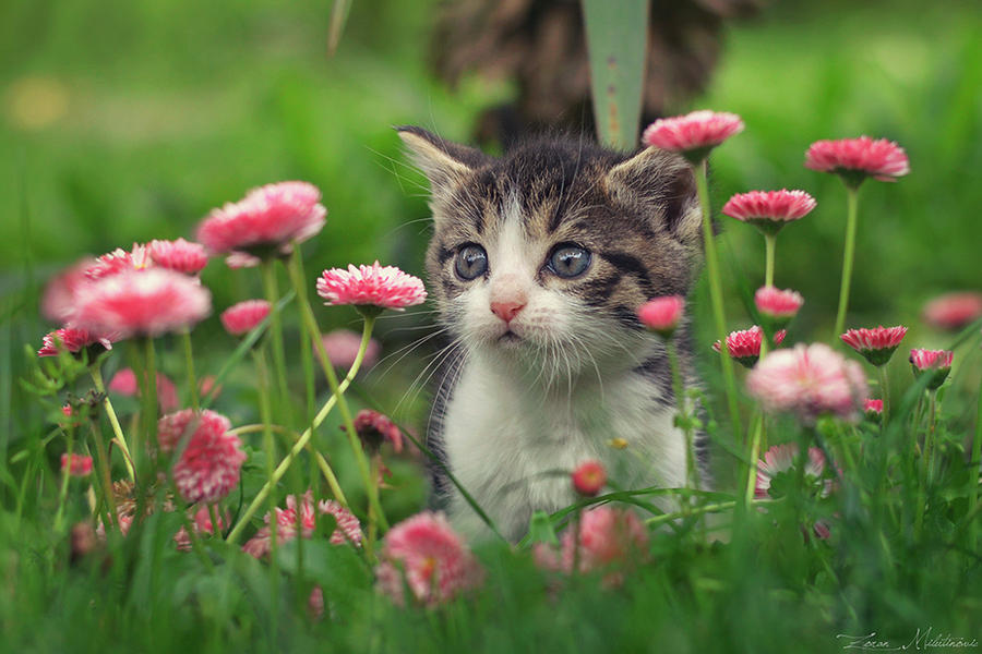 Furry florist by ZoranPhoto