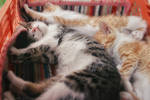 Sleeping mode by ZoranPhoto