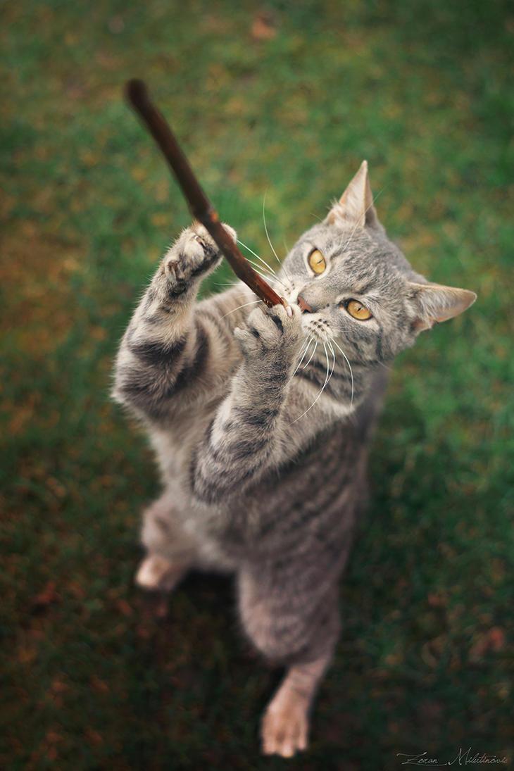 Flute player by ZoranPhoto