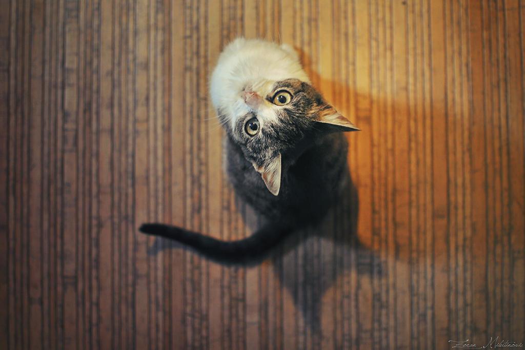 Hello camera by ZoranPhoto