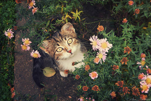 In the flowers
