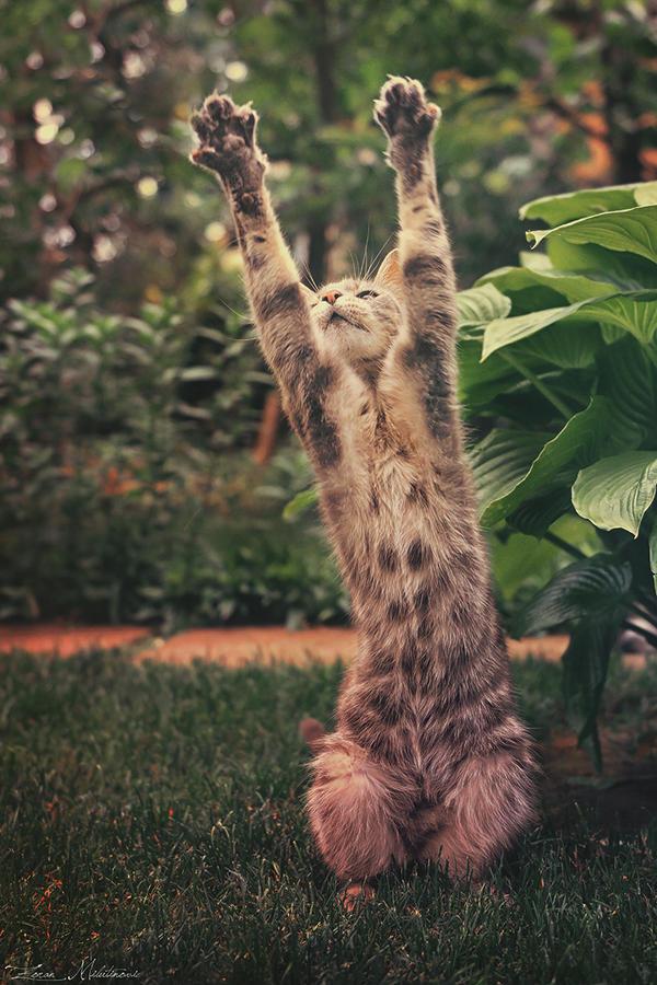 paws up by zoranphoto d8esjdh