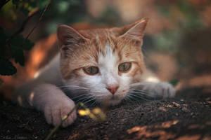 Focused by ZoranPhoto