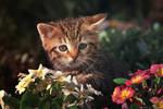 Furry gardener