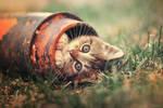 Fooling around by ZoranPhoto