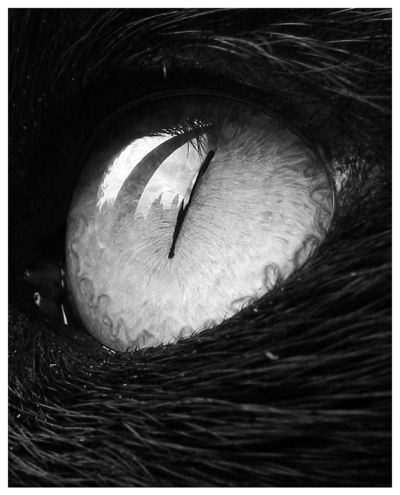 Tina's Eye by pinkpotassium