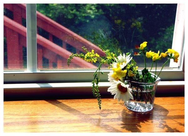 Sunny Window by pinkpotassium