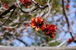 Orangish-red flowers